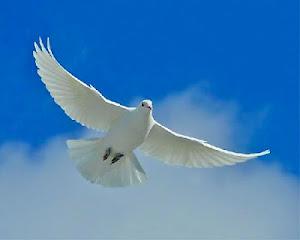 Pomba da paz!