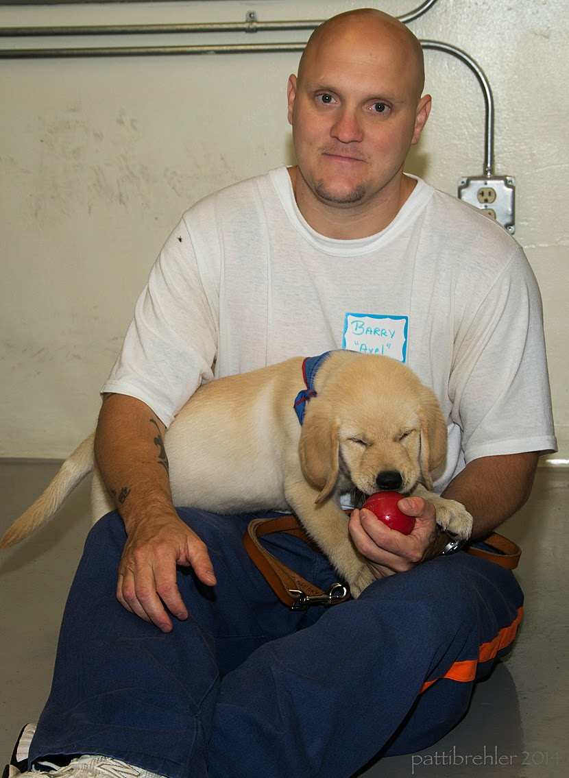 A bald man wearing prison blue pants and a white t-shirt is sitting on a concrete floor with a small yellow puppy on his lap. The man is looking at the camera and holding a red Kong toy with his left hand - the puppy has his eyes closed and is chewing on the kong. The man's right arm is resting on his knee. Behind the man is a yellowish brick wall with electrical conduit attached to it.