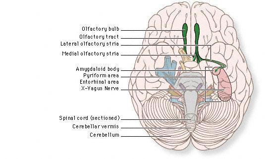 Notez On Nursing Cranial Nerve Review part 2 – Cranial Nerves Worksheet