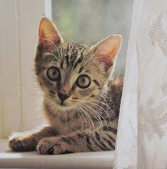 le chaton du jour
