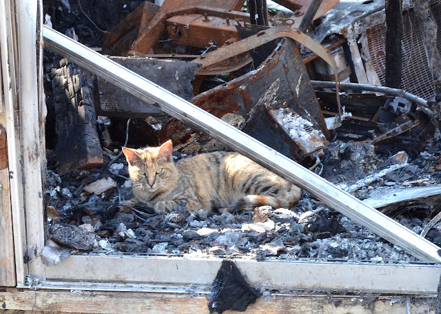 torbie cat and burned out trailer