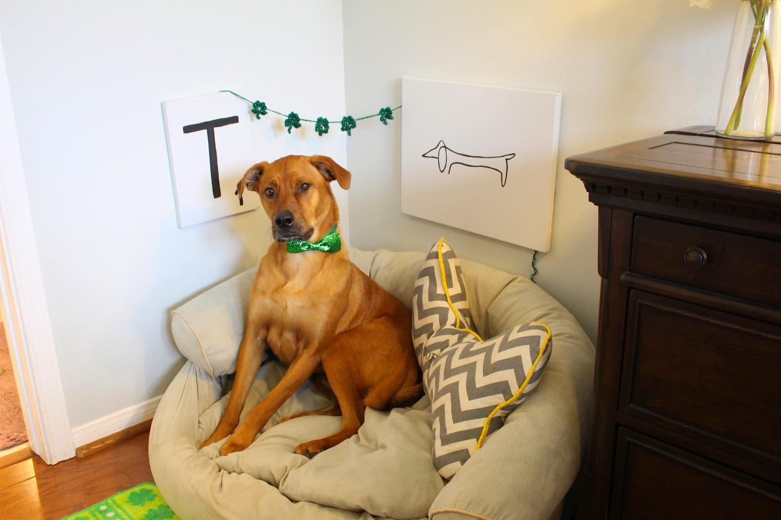 St. Patty rug, green decor,