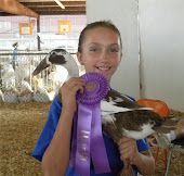 2011 Pope County Fair Poultry Show