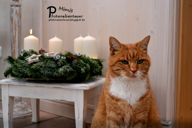 Mimi vom Blog Pfotenabenteuer am 1. Advent