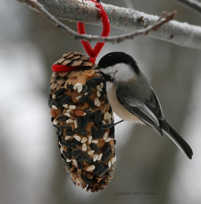 Image of pinecone feeder