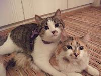 Kajsa och Billie