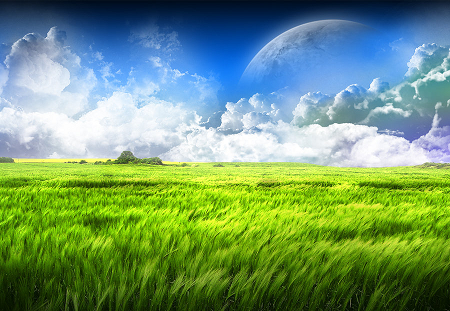 Mơ thấy đứng ở cánh đồng lúa xanh tốt