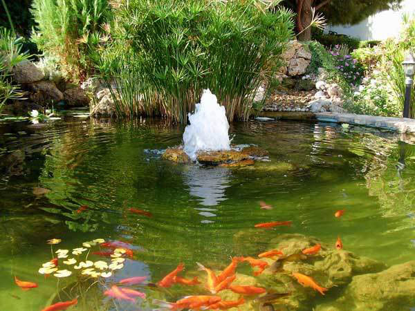 Koi fish landscaping tips koi pond aeration needed for for Backyard koi fish pond