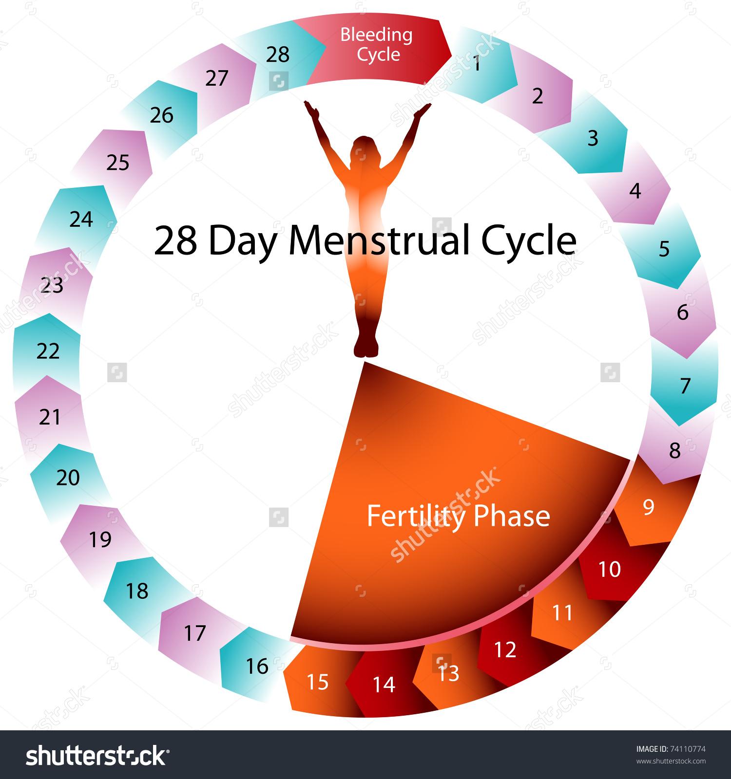 12 день цикла какая вероятность забеременеть