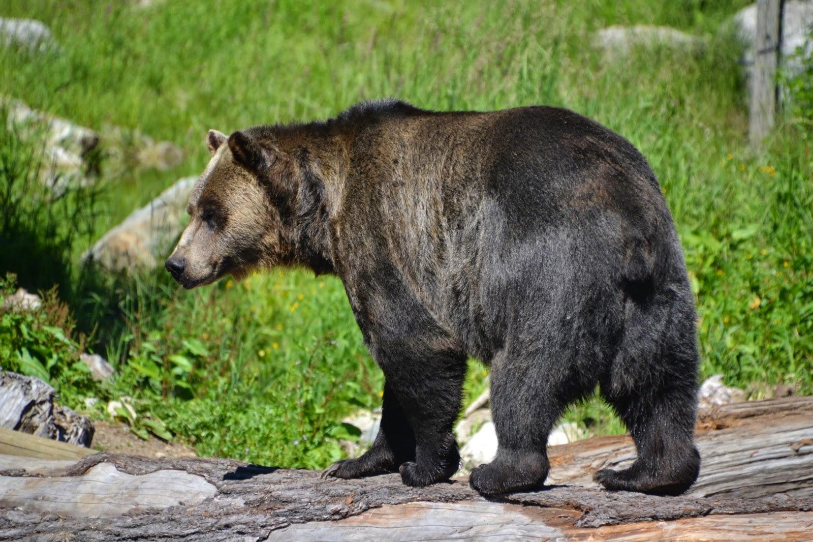 bear vancouver