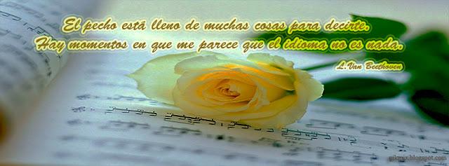 Rosa amarilla, Imagen con frase para facebook