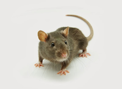 Al Kisah Tikus dan Sahabat sahabatnya