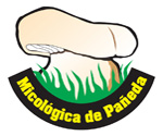 Sociedad Micológica de Pañeda