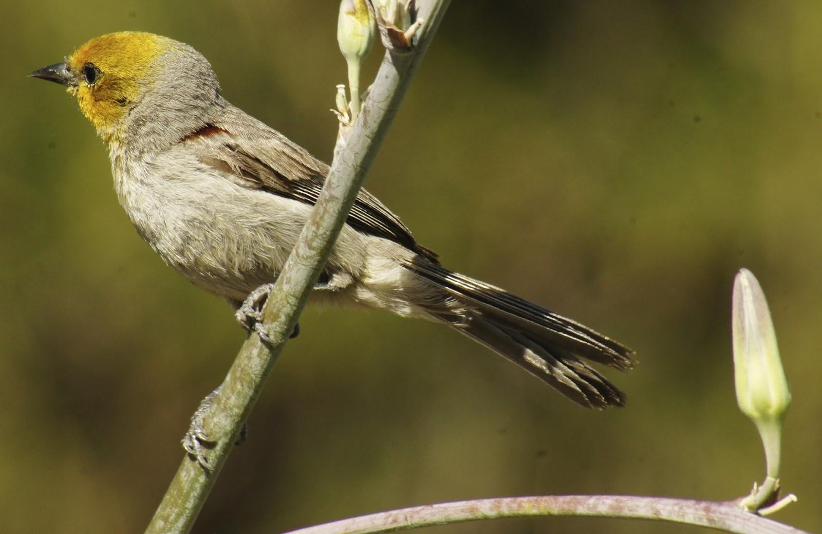 butler s birds 05 16 12