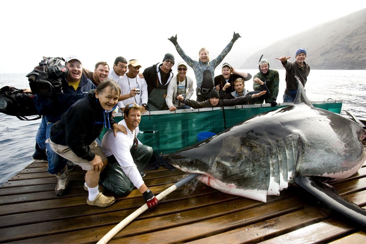 http://1.bp.blogspot.com/-1rQW5An84wI/UWdVeb2OU1I/AAAAAAAAFuM/dvwezX1gCAM/s1600/shark4.jpg