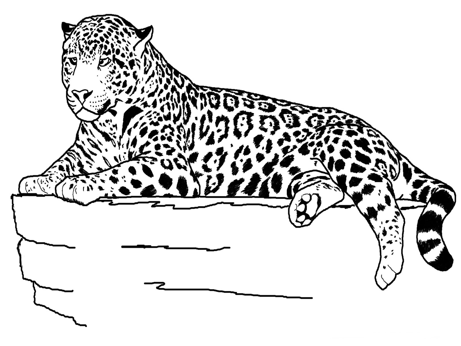 Coloring Pages Animals Realistic : Jaguar animal coloring pages realistic