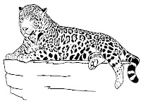 Jaguar coloring pages to print