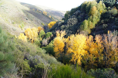 Definición de zona riparia o de ribera de río (II). Hikergoer http://www.panoramio.com/photo/98786047
