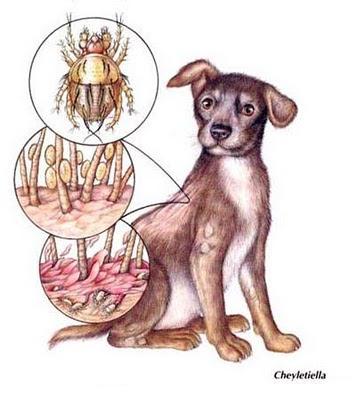 Los indicios si son los parásitos en el organismo de la persona