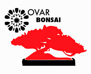 Ovar Bonsai