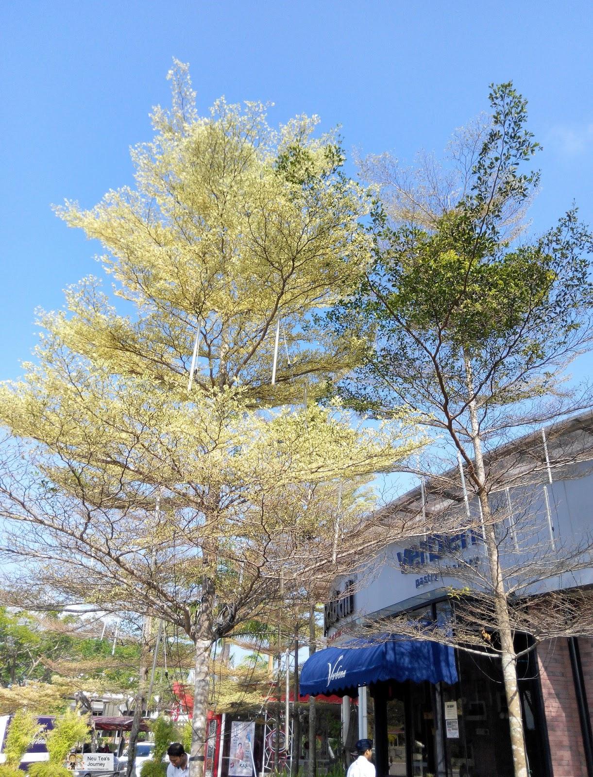 Verbena in Sutera Mall 五福城