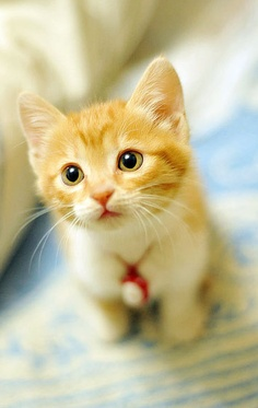 Adorable yellow kitten picture