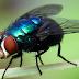 Estudo para Obreiros: A mosca e o perfume