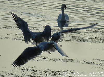 http://hpz-fotografie.blogspot.ch/p/aus-der-wasserwelt.html