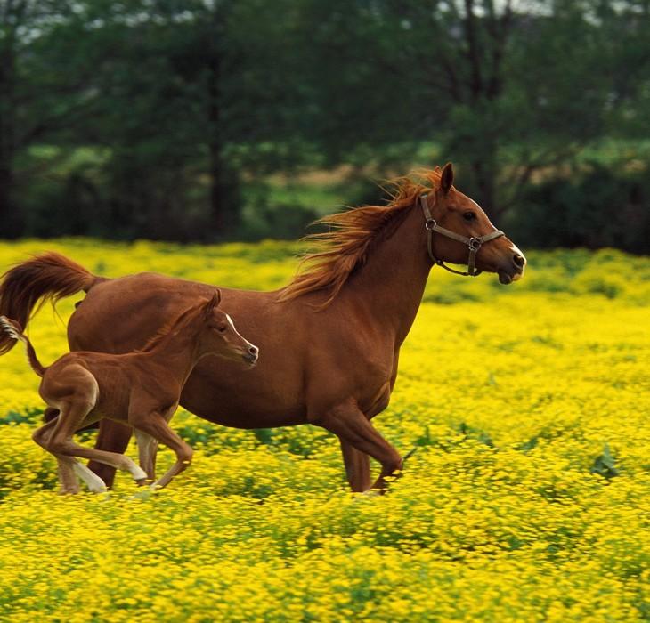 Beautiful Baby Horses Wallpaper Beautiful Horse Wallpaper