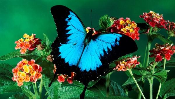 Sky Dark Color Butterfly Nice Photos