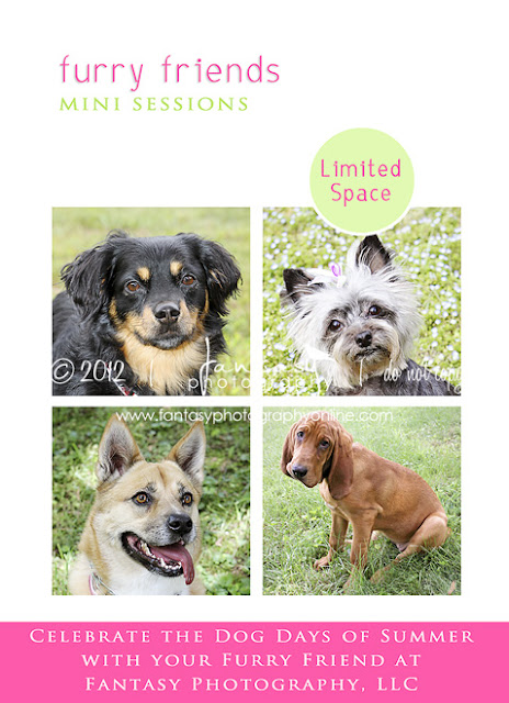 Winston Salem Pet Photographer | Dog Photography by Fantasy Photography, LLC