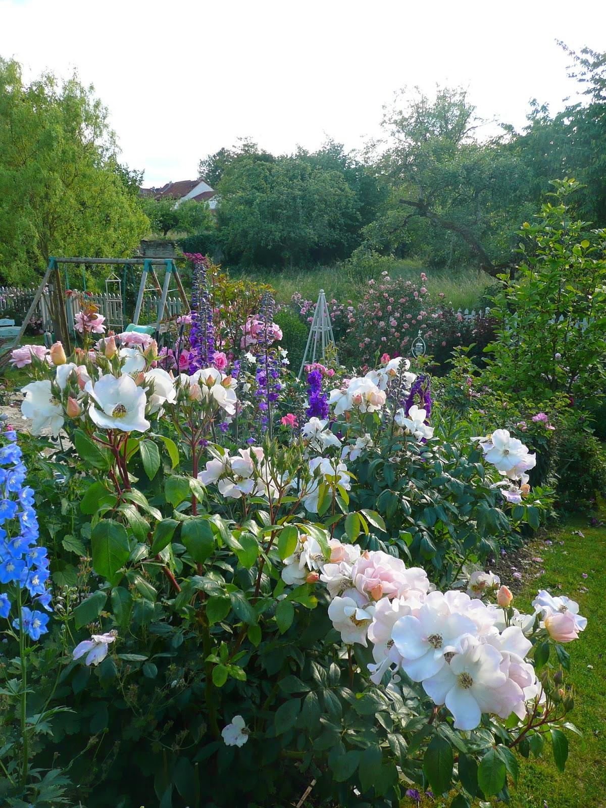 Notre jardin secret les roses qui r sistent - A quel moment tailler les rosiers ...