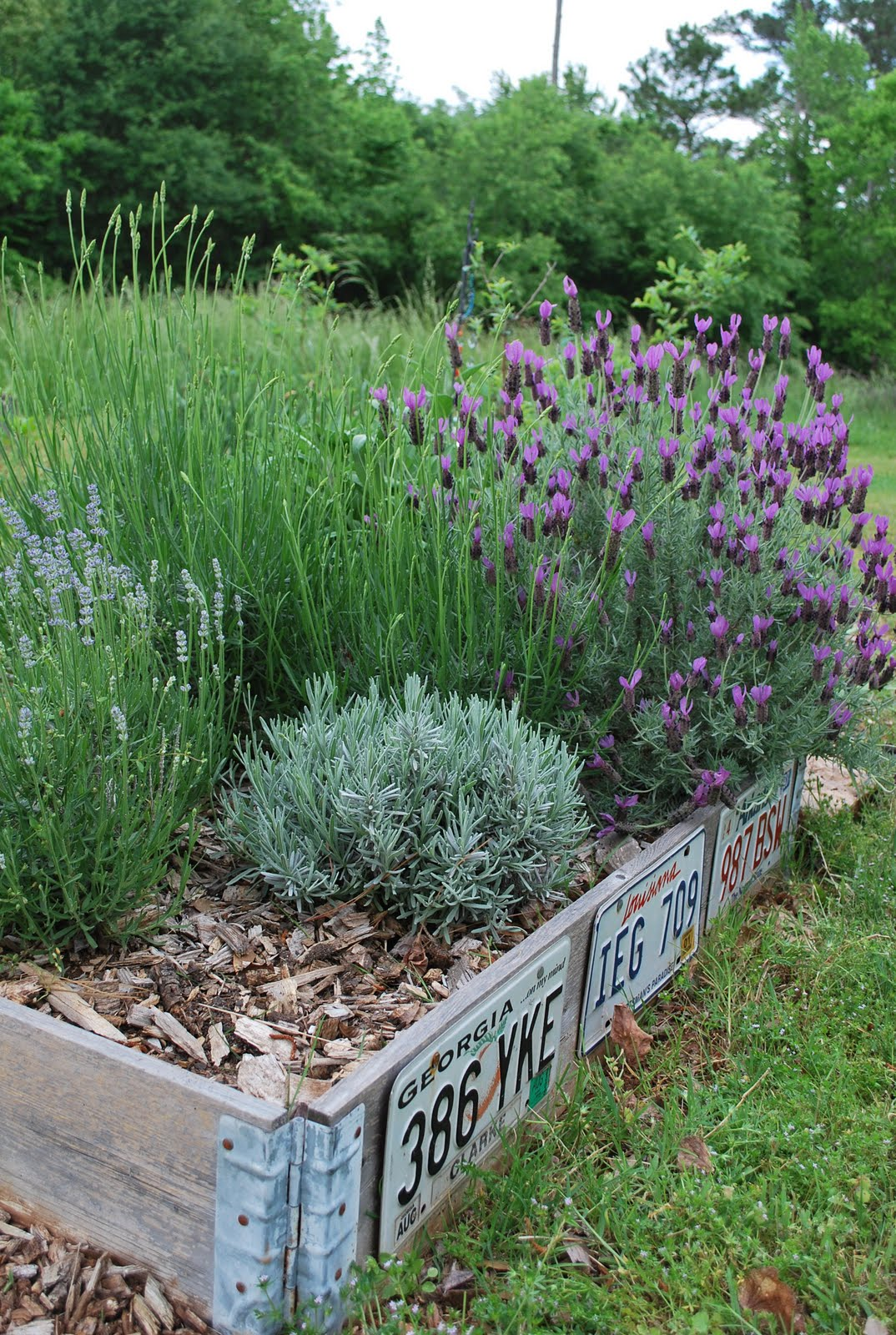 Plants and Flowers that will Grow Well in your Rock Garden