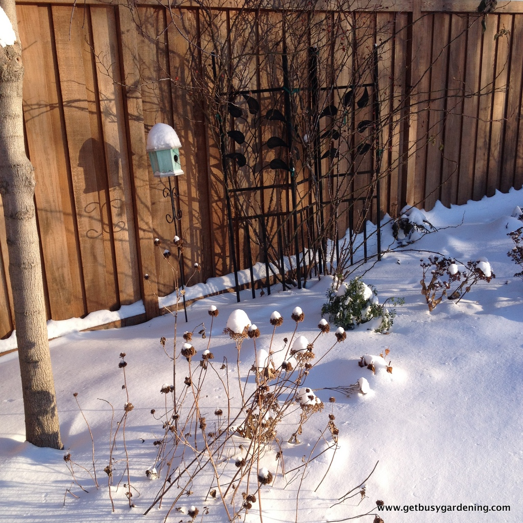 winter interest in the garden