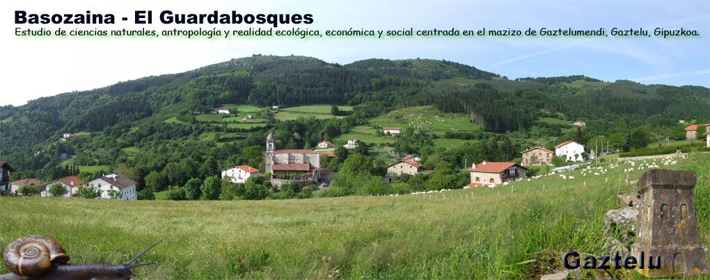 Basozaina  - El guardabosques