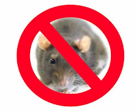 se muestra que debe terminarse con las ratas principales transmisoras de la enfermedad