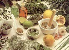 obat tradisional wasir berdarah tanaman