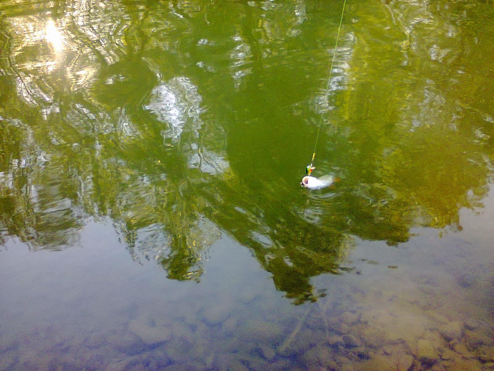 pescuit la rapitori primavara