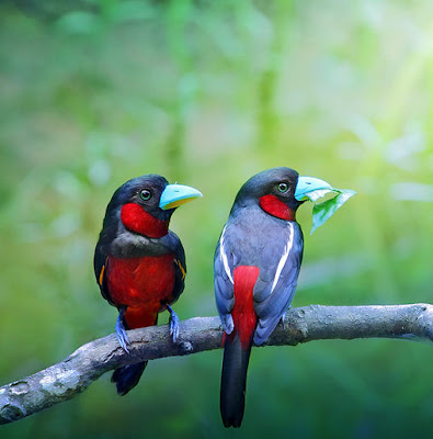 Pajarillos de colores en la selva - Color birds