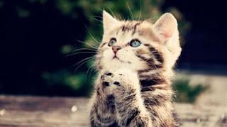 Alasan Nabi Sangat Sayang Terhadap Kucing, Fakta Ilmiah Berbicara