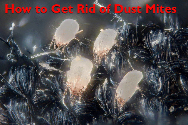 The Diy Helpers How To Get Rid Of Dust Mites