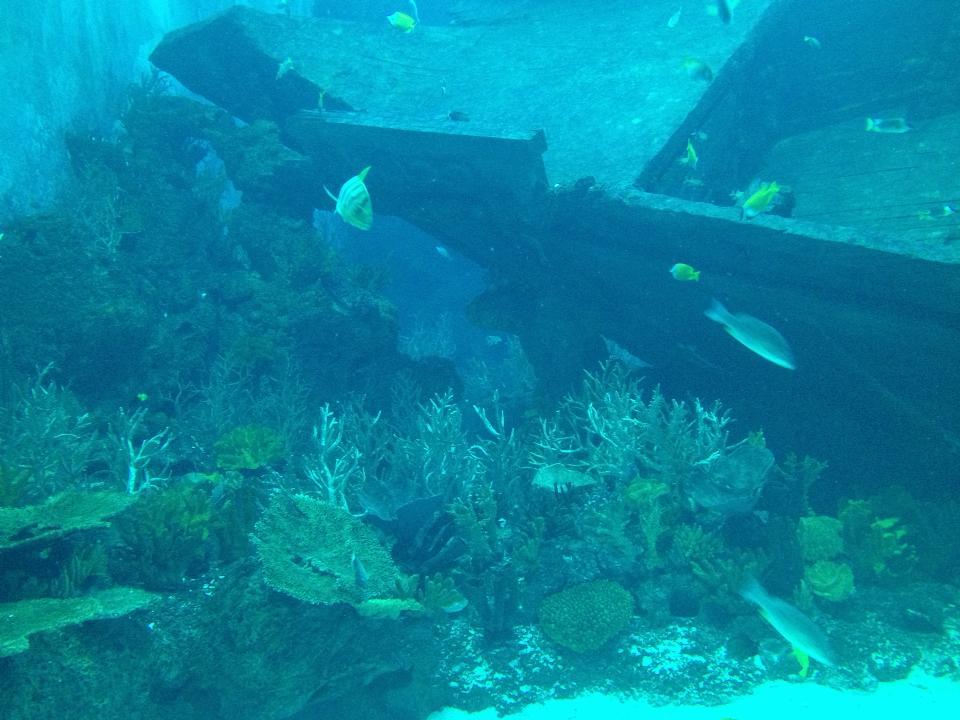sea aquarium marine park review