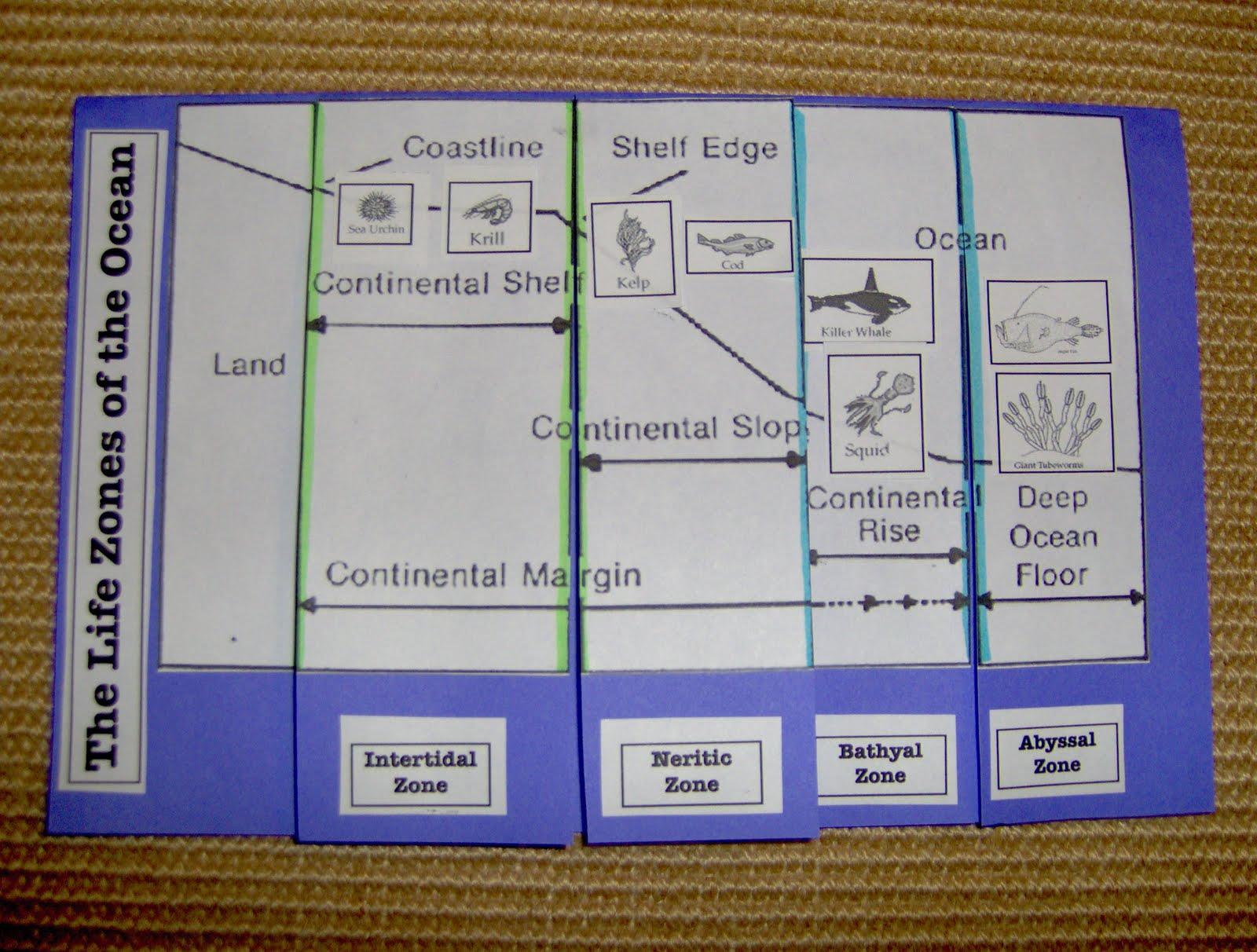 Bookish Ways in Math and Science Unit Resource Portfolio Oceans – Ocean Zones Worksheet