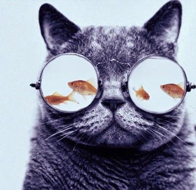 pesce rosso, sul serio, yea, cane, gatto, vita domestica, LOL, blog umoristico, umorismo,