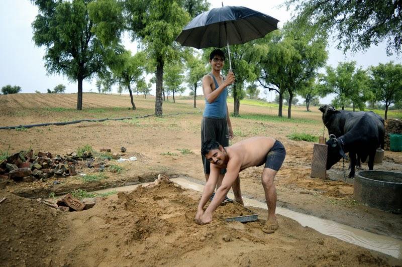 rain cattle dry palace