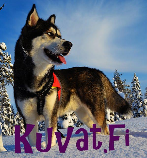 Kuvat.fi