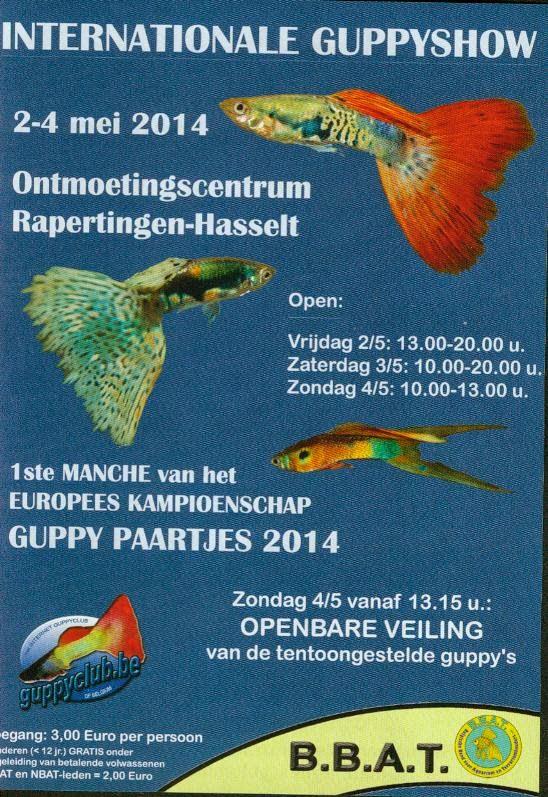 02-04-mai-2014-manche-de-championnat-europe-de-guppy-haselt-belgique