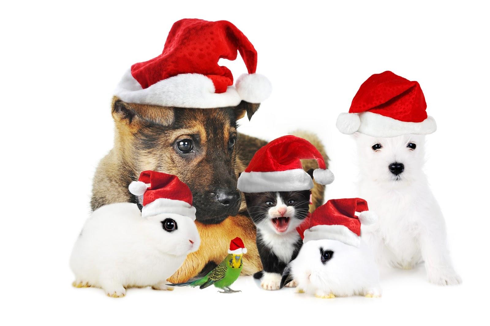 Cute christmas animals - photo#26