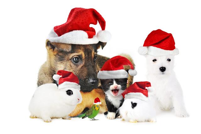 Funny Christmas company.