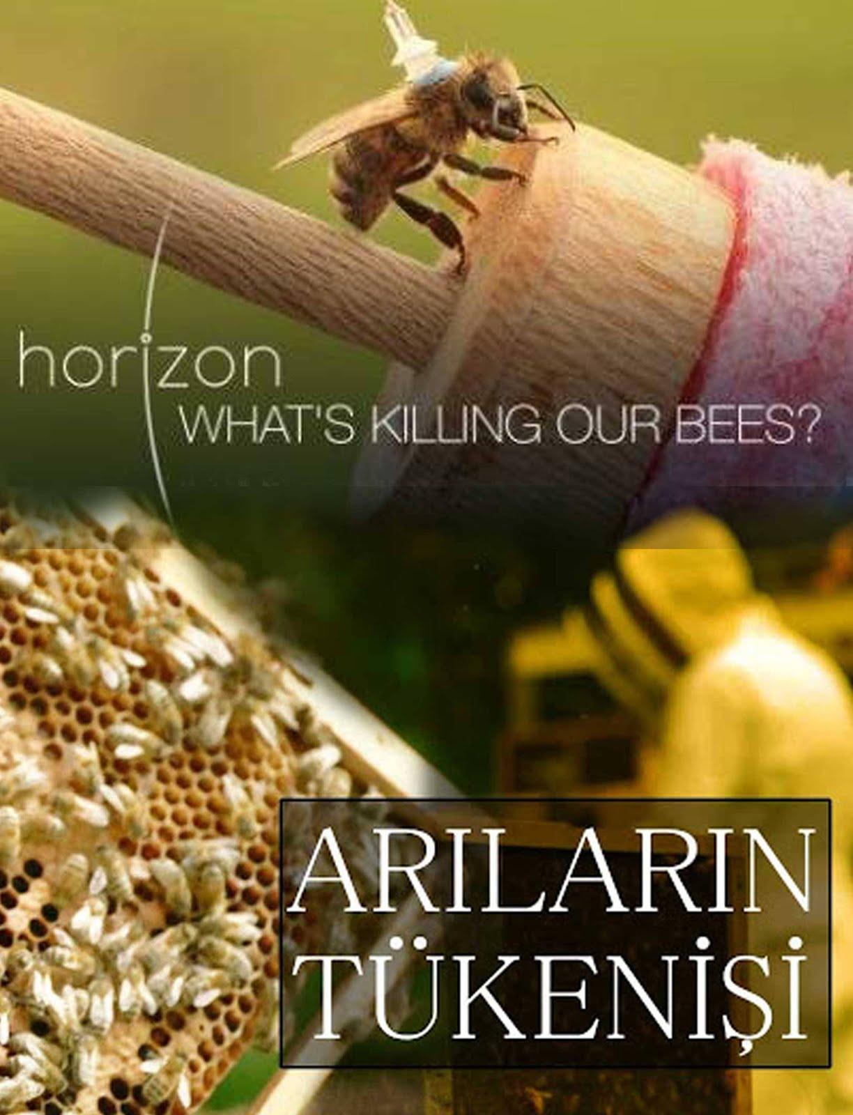 Arıların Tükenişi